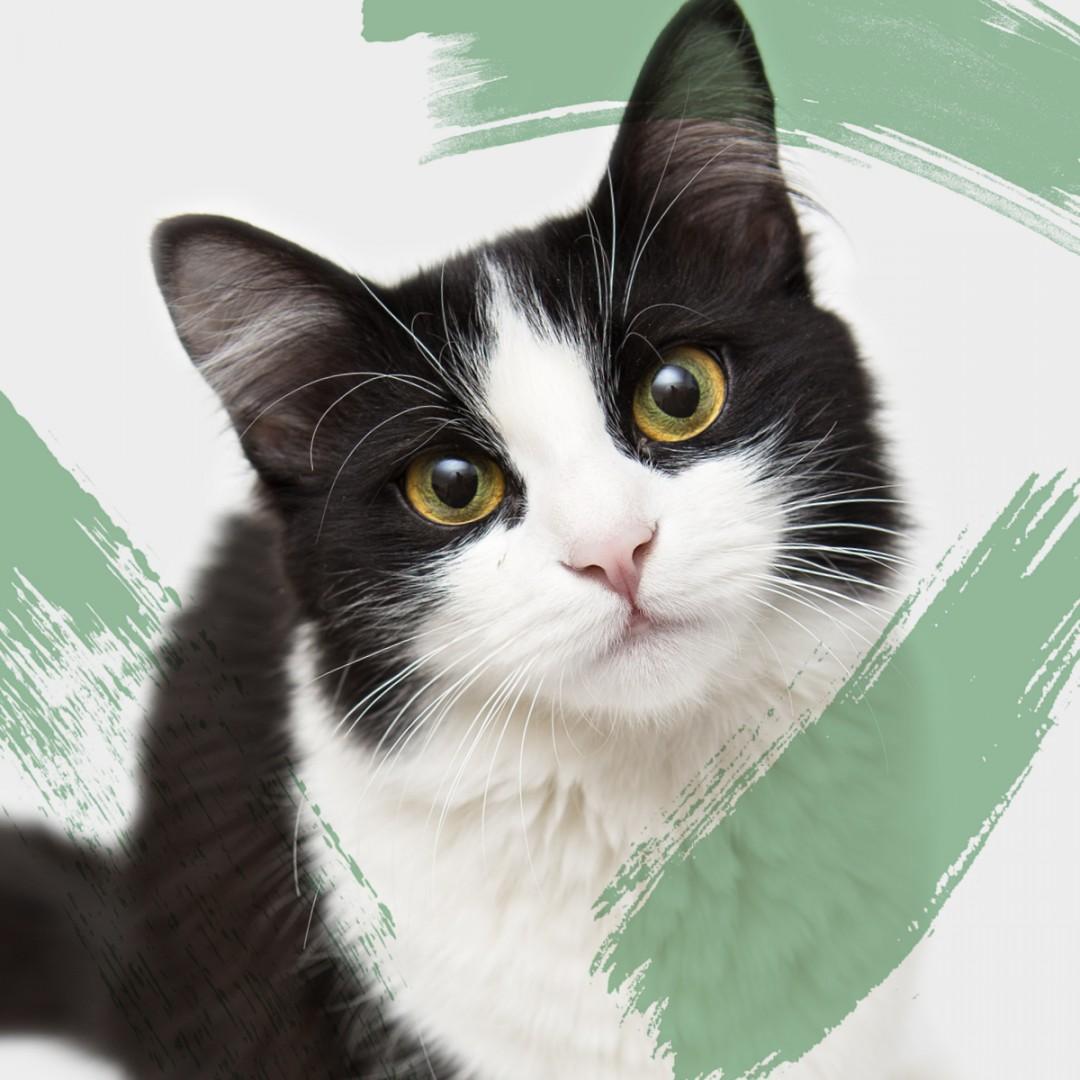 ENPA e i gatti in cerca di casa