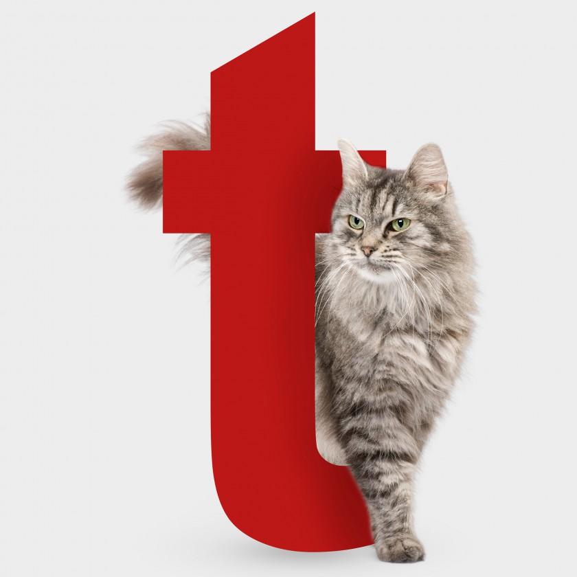 Tutti i gatti che cerchi: Enpa Treviso al Tiziano!