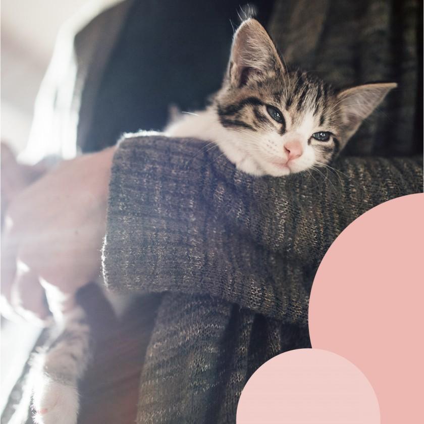 Adozioni Enpa: i gatti da adottare al Tiziano!